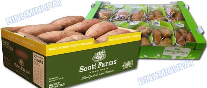 Sản xuất thùng carton đựng khoai lang xuất khẩu